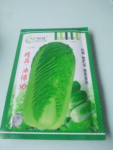 油绿六六白菜