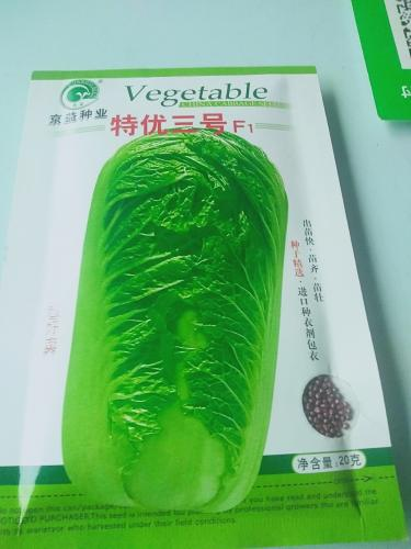 特优三号白菜,叶绿耐储,农民种植的首选