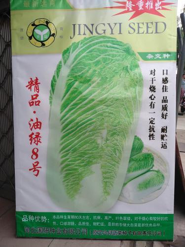 精品油绿8号