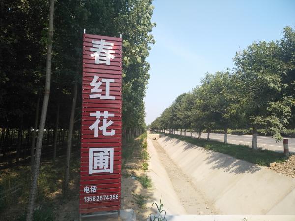 滦南长宁春红花卉